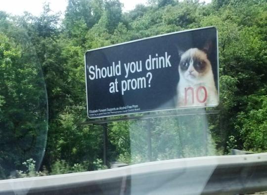 Grumpy cat prom ad