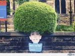ambient bush
