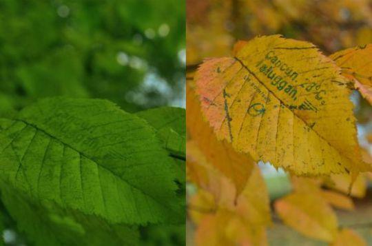 folleto hojas