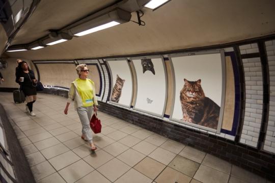 cats-tube