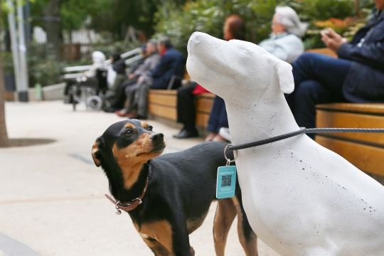 gossos.jpg